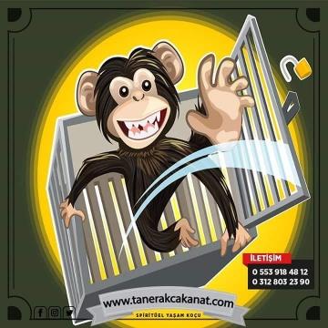 Hayatımızdaki Maymun Tuzakları